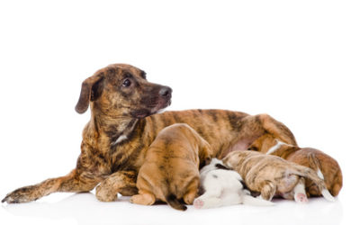 Did you know that it is Illegal to Breed or Sell a Dog or Cat in the ACT without a Licence?