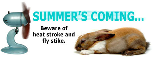 Summer is coming... beware of Heat Stress and Flystrike!