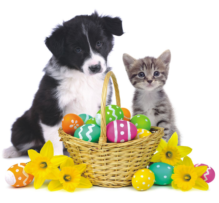 Happy Easter Canberra! Easter is full of delicious sweats and treats… but these can be deadly to your pet! Please be aware of the dangers and know how to keep your best friend safe this Easter!