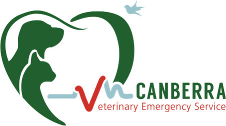 Canberra Veterinary Emergency Services