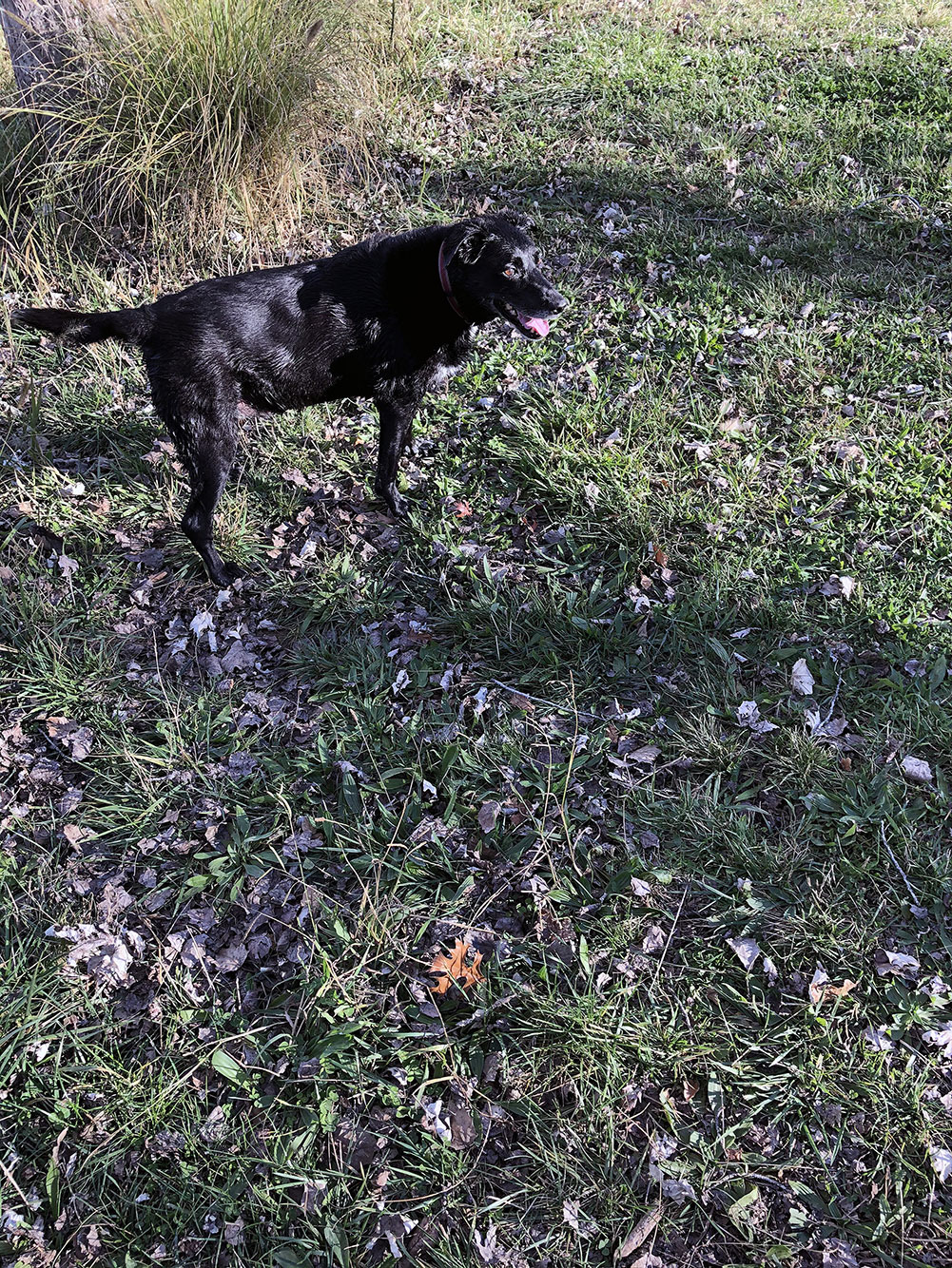 Darcy the superdog